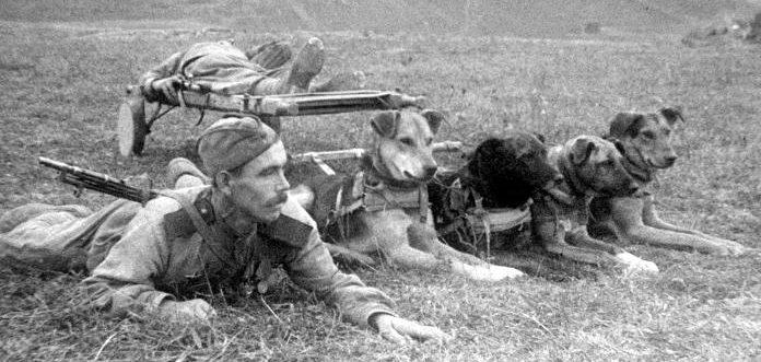 Собакам — защитникам Родины