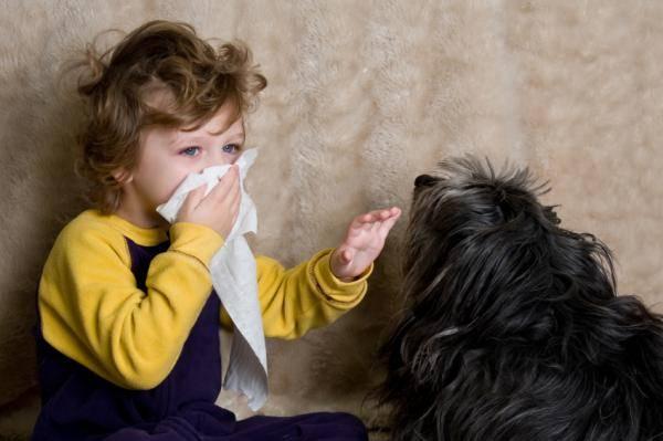 Аллергия на животных ?
